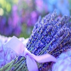 Aromaterapia - Introdução